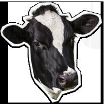 Vitala Dairy