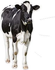 Vitala Milk