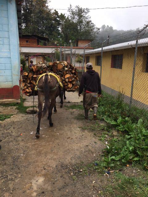 Guatamala donkey wood